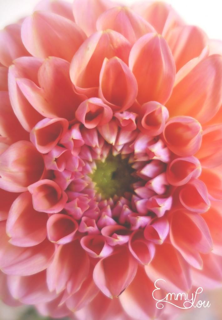 juli flowers4